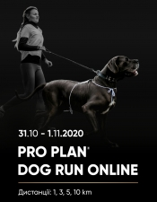 DOG RUN ONLINE